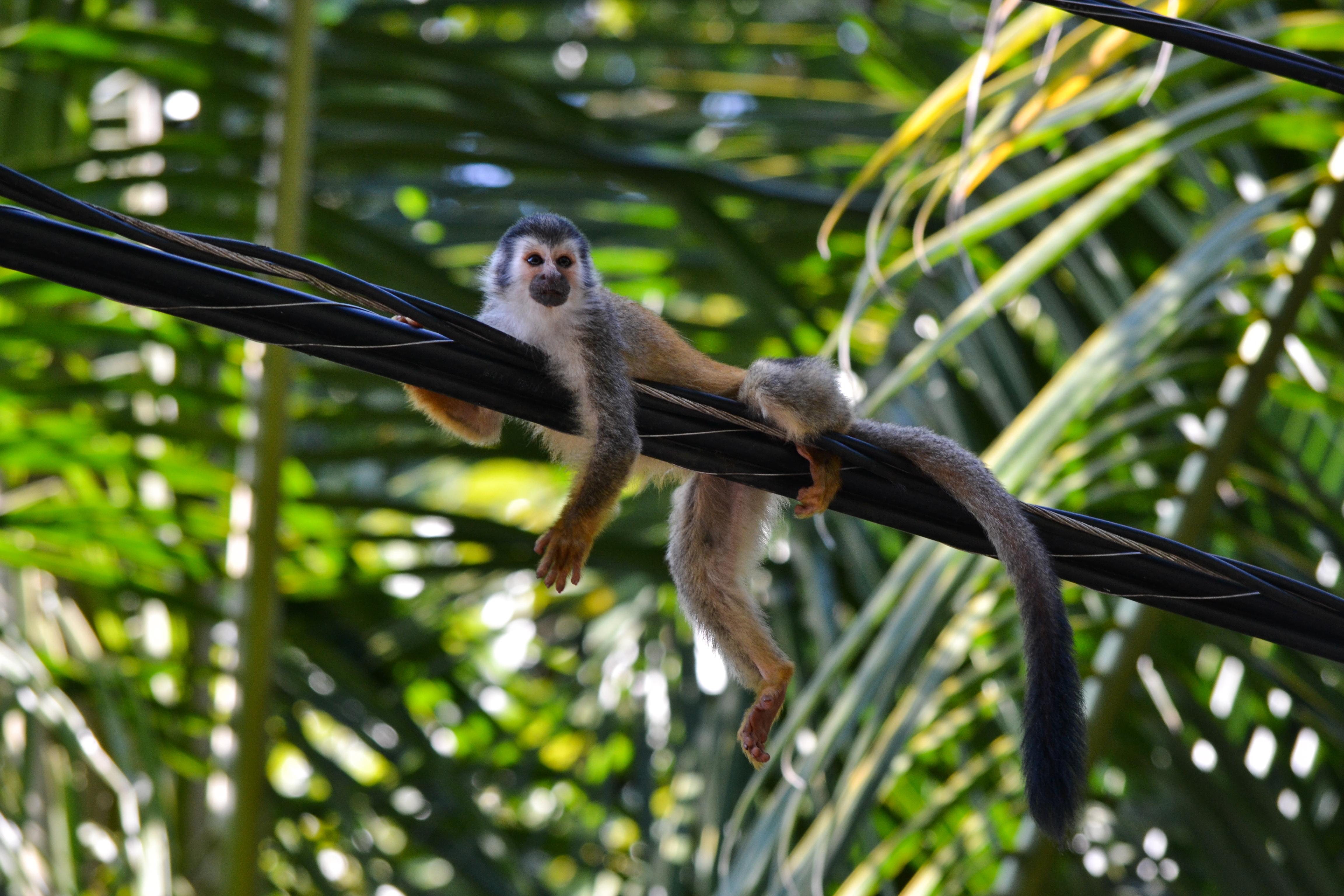 manuel antonio national park u2013 the land of monkeys sarah