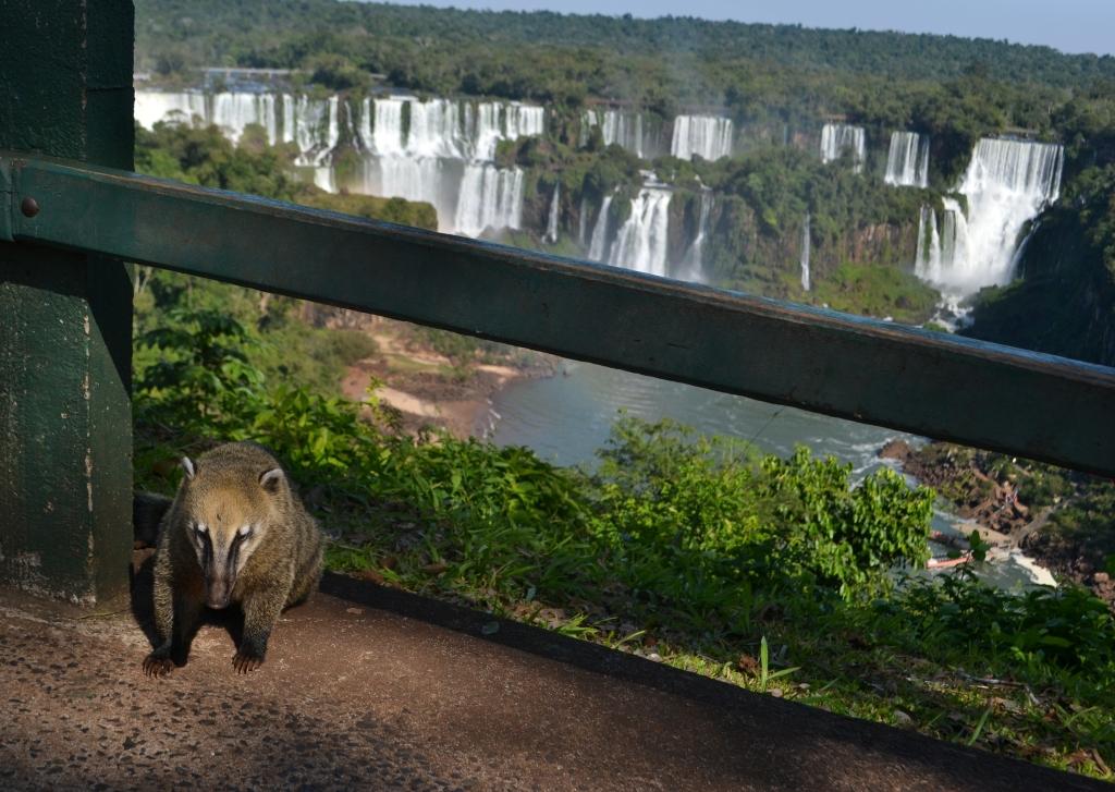 Iguazu Falls-35